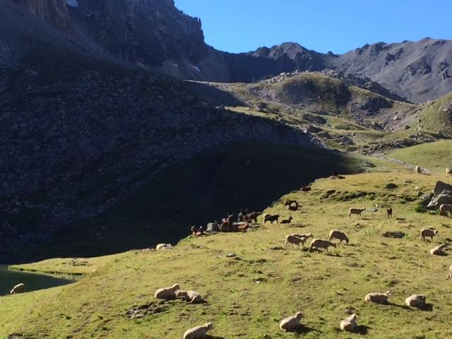 Balade nature à Valloire